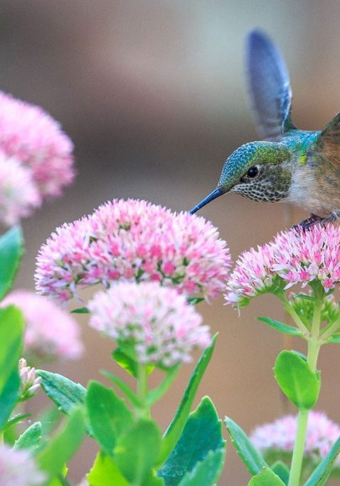 closeup of hummingbird on flower